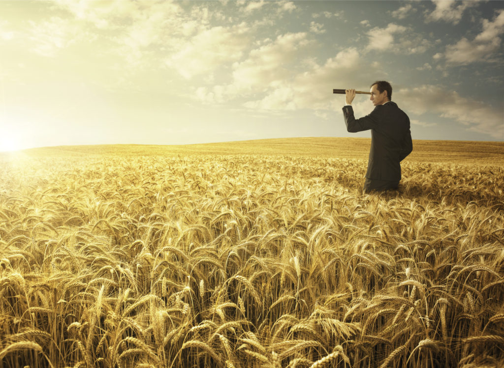 Young businessman in the wheat field searing for the new opporun